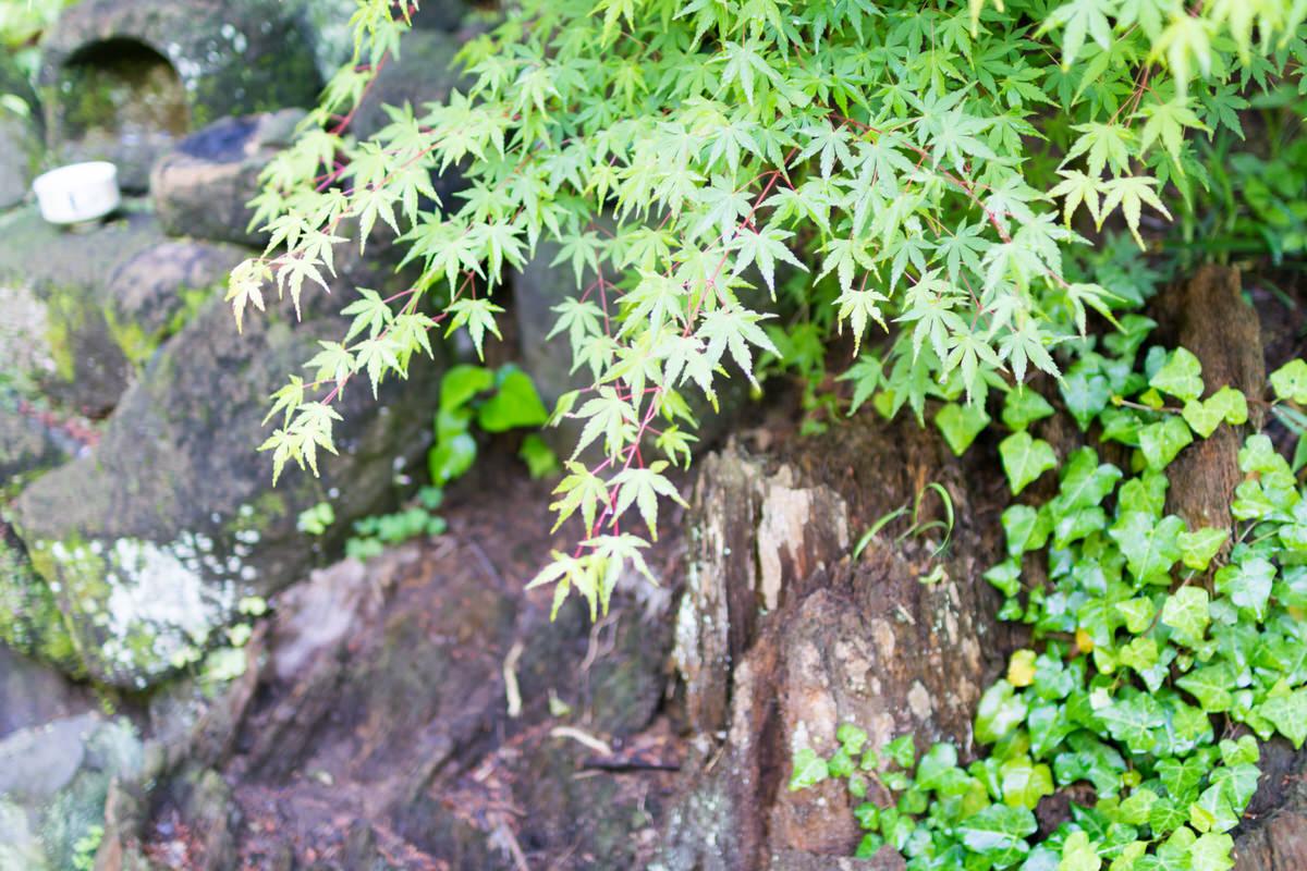 160613sugimoto_temple6